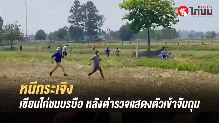 เชียนไก่ชนบรบือกระเจิง หลังตำรวจแสดงตัวเข้าจับกุม