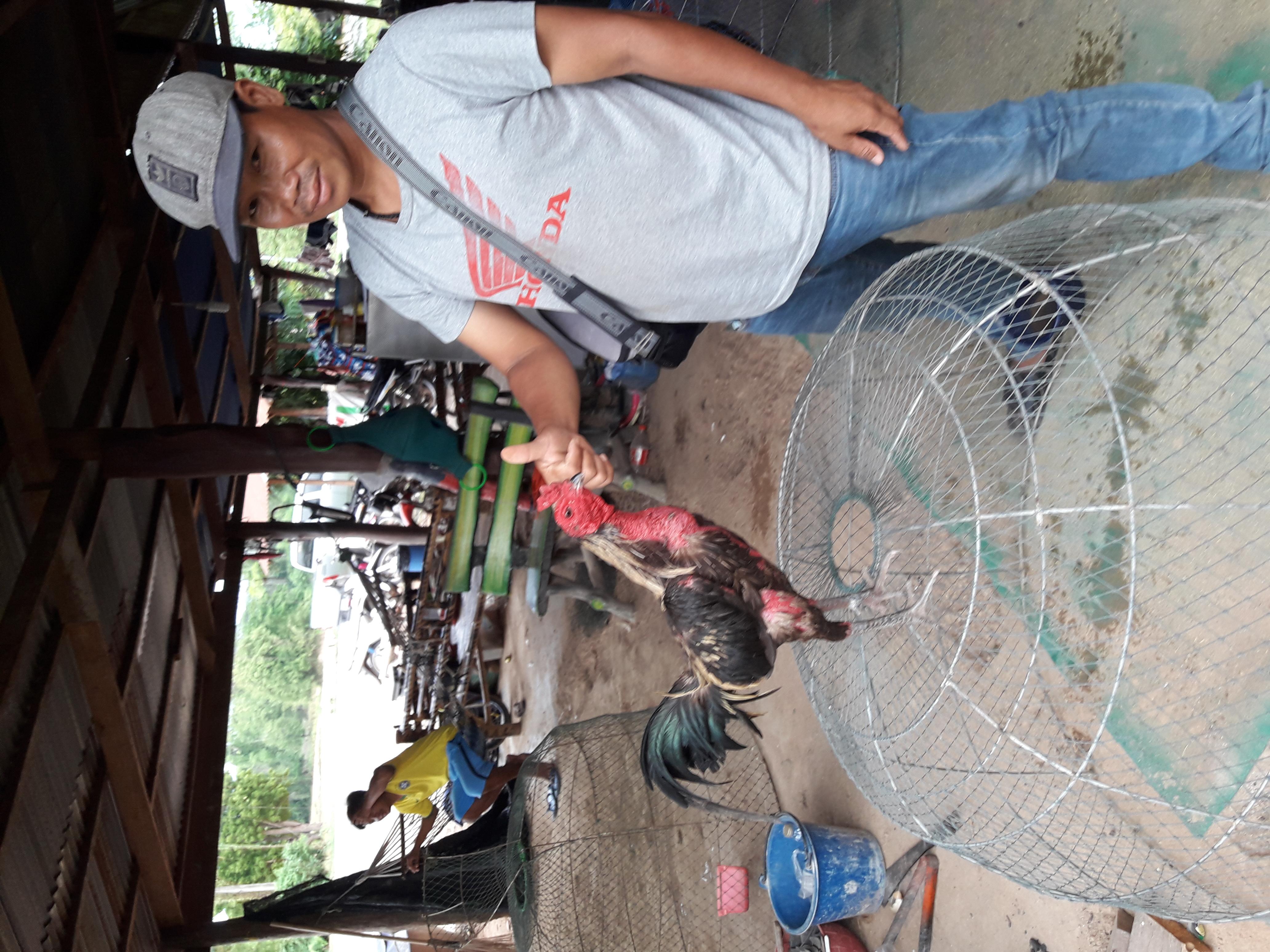 ไก่ชนพม่าแข้งคม